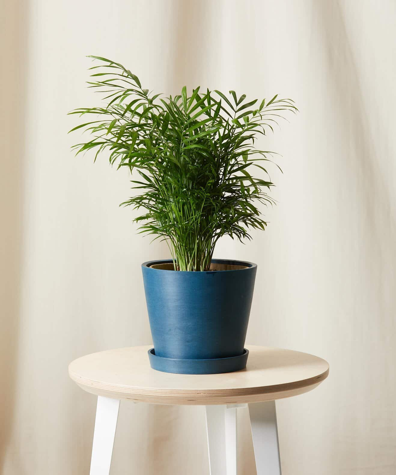 Bloomscape Parlor Palm Plant - WorkwearToronto.com - Best Christmas 2020 Gift Ideas For Women