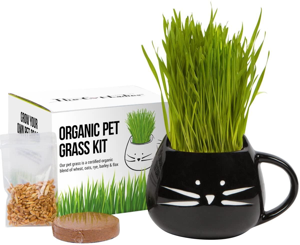 Organic Cat Grass Growing Kit - WorkwearToronto.com - Christmas 2020 Gift Ideas - Amazon